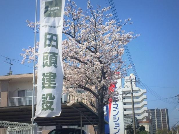 田頭建設 桜